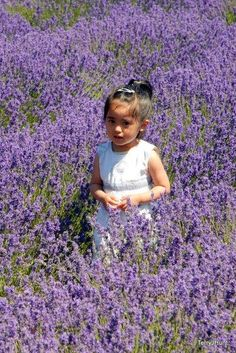Lavender Girl photograph by Paladin