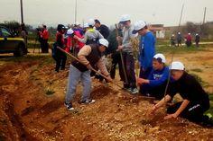 Με επιτυχία πραγματοποιήθηκε η δενδροφύτευση από τους μαθητές στον οικισμό του Μαΐστρου
