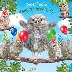 happy birthday images owls - Google Search