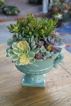Image result for designer succulent aqua planter