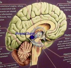 Pineal Gland: The Gateway to Higher Dimensions