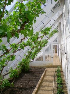 Inside the Vine House, Scotney Castle