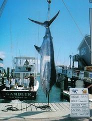 Hatteras Harbor Inshore Charters - HALF DAY & FULL DAY INSHORE AND SOUND FISHING (Prices are subject to change) 7:00 am – 11:30 am • 12:30 pm – 5:00 pm *Prices reflect a 5% discount for cash or check
