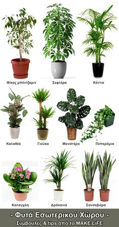 10 houseplants that need (almost) zero sunlight 54 10 houseplants that need (almost) zero sunlight 54 Indoor Palms, Best Indoor Plants, Indoor Trees, House Plants Decor, Plant Decor, Interior Design Living Room Warm, Pot Plante, Office Plants, Bedroom Plants
