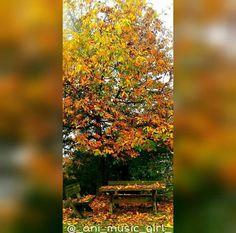 #wood #bank #forrest #orange #autumn