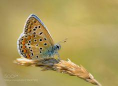 little blue at the sun by aitzaundi #nature #photooftheday #amazing #picoftheday