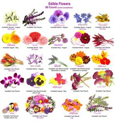 Info graphic of edible flowers + 23 Recipes That Will Feed Your Inner Flower Child