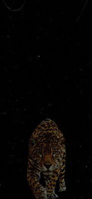 خلفيات سوداء للموبايل خلفيات سوداء فخمه خلفيات سوداء سادة خلفيات سيارات سوداء خلفيات سوداء ايفون خلفيات سوداء له Mobile Wallpaper Wallpaper Animal Tattoo