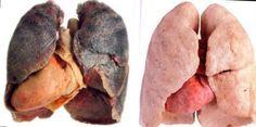 Великолепное средство для чистки легких | Секреты красоты и здоровья