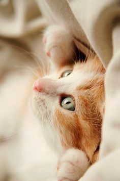 oh god...that kitty...i want it...I WANT IT NOW