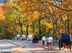 New York, Central Park-Horse Carriage Ride