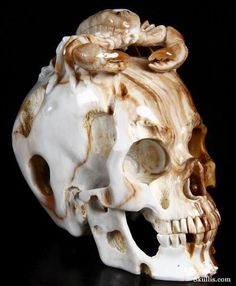 Petrified Wood Crystal Skull and Scorpion Sculpture