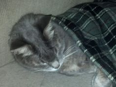 Sam, our 15 year old senior rescue cat, tucked in for the night.