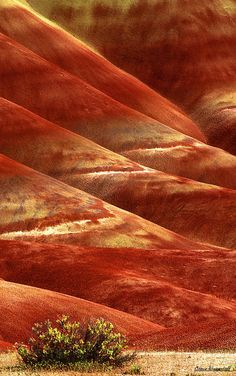 ✯ Painted Hills of Oregon