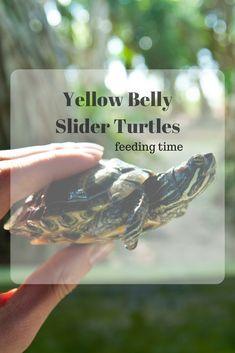 Building Outdoor Turtle Ponds | Turtles | Turtle pond