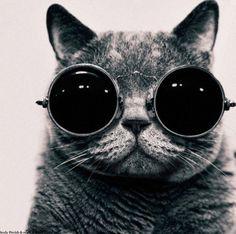 Cat Lennon