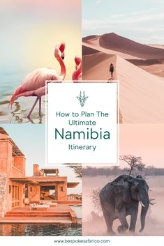 Ultimate Road Trip Namibia - Bespoke Safari Co. Africa Destinations, Travel Destinations, Cool Places To Visit, Places To Travel, Road Trip, Dubai, Slow Travel, Parc National, Ultimate Travel
