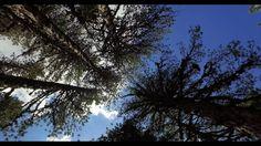 Cyprus Troodos Mountains Atalanti Nature Trail Part E - YouTube