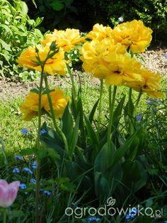 Rajski ogród Ani 2... niekończące się marzenie... - strona 552 - Forum ogrodnicze - Ogrodowisko