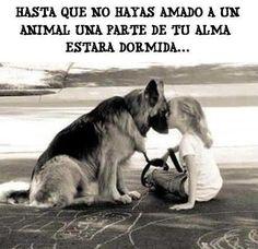 Ama y respeta los animales