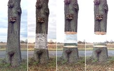 Graphic designer Daniel Siering and art director Mario Schuster wrapped part of a tree trunk with plastic sheeting and made an amazingly det...