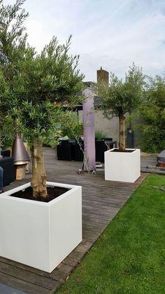Palm Trees Landscaping, Front Yard Landscaping, Outdoor Plants, Outdoor Gardens, Backyard Garden Design, Modern Backyard, Garden Lighting Diy, Modern Outdoor Fireplace, Mediterranean Garden