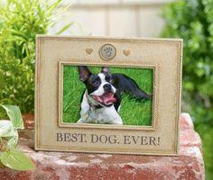 Grasslands Road: Best. Dog. Ever. Frame Brainstorm, Inc. 625 N. Bridgeport Terrace Lindenhurst, IL 60046 www.brainstormeducation.com