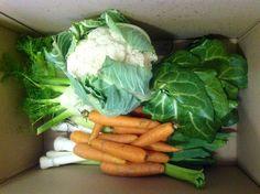 Scatola bio verdura