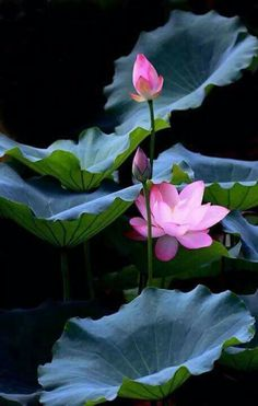 Jk The post Jk appeared first on Moja strona. Lotus Flower Pictures, Flower Images, Flower Photos, Flower Art, Flowers Nature, Exotic Flowers, Amazing Flowers, Pretty Flowers, Lotus Flowers