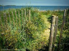 Path to beach, Skerries, Co. Ireland Beach, Dublin, Paths, Vineyard, Feels, Outdoor, Outdoors, Vineyard Vines, Outdoor Games