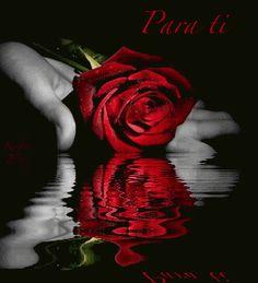 Descargar Tarjeta de rosa en movimiento con frase de amor