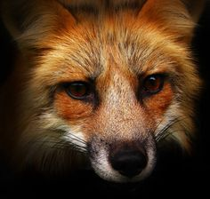Fox's Feud by KattFloka on DeviantArt
