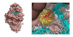 Enzima ajuda bactérias a se defenderem de oxidantes gerados pelo sistema imune