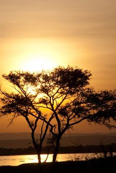acacia tree by Lake Albert, one of the African Great Lakes located on the border of the Democratic Republic of Congo (DRC) and Uganda. Photo: Alison M. Jones