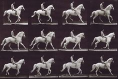 Animal Locomotion Plate 617: Nude Male on White Horse by Eadweard Muybridge