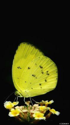 Butterfly World... by Jenny on 500px