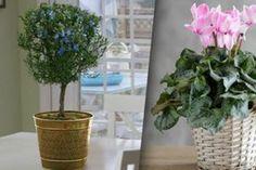 Priviți aceste plante frumoase! Doriți să aflați secretul cum se cultivă violetele de Parma? - Fasingur Gardening, Plant, Garten, Lawn And Garden, Garden, Square Foot Gardening, Garden Care, Horticulture