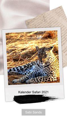 Kalender 2021 wieder erschienen !! Safari, Europe, Travel Report, Africa, Calendar, Pictures