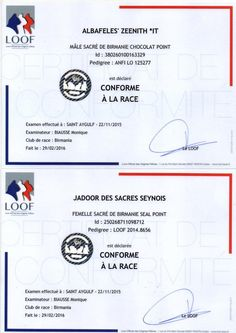 certificat SQR chats