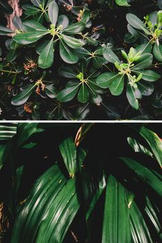Escapade autour de Toronto - les jardins botaniques d'Hamilton Escapade, Botanical Gardens, Hamilton, Toronto, Plant Leaves, Plants, Plant, Planets