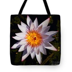 """Pink Tipped Water Lily square Tote Bag 18"""" x 18"""" at http://fineartamerica.com/products/pink-tipped-water-lily-square-layla-alexander-tote-bag-18-18.html"""