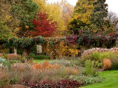 The garden in fall