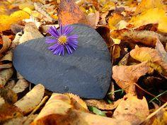 Podzim, Listy, Mokrý, Vlhký