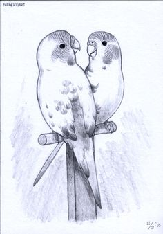 30 Super Ideas for tattoo couple animal deviantart Bird Pictures, Pictures To Paint, Bird Drawings, Animal Drawings, Animal Sketches, Drawing Sketches, Pine Tree Tattoo, Budgies, Bird Art
