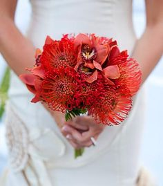 Lovely bouquet of pincushion flowers arranged by local florist, Lorin of Black Orchid Florist