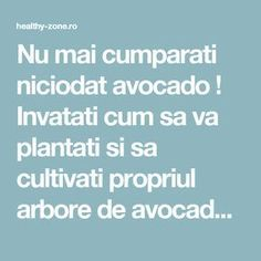 Nu mai cumparati niciodat avocado ! Invatati cum sa va plantati si sa cultivati propriul arbore de avocado cu fructe nelimitate ! - Healthy Zone Avocado, Good To Know, Health Fitness, Home And Garden, Flowers, Gardening, Food, Study, Agriculture