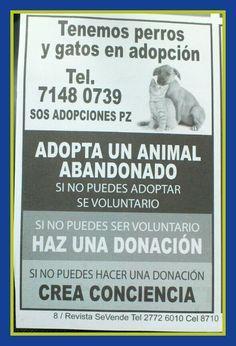 tenemos perros y gatos en adopción (mandatos)