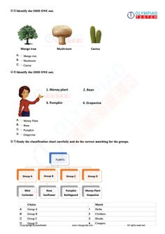 Olympiadtester for Class 2 NSO exam preparation has online mock tests, sample papers, syllabus, printable PDF worksheets and chapter-wise practice questions. Olympiad Exam, Mental Maths Worksheets, Online Mock Test, Money Plant, Sample Paper, Printable Worksheets, Pdf, This Or That Questions, Garden
