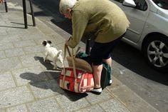 10 Dog Breeds That Make Wonderful Companions For Seniors  https://iheartdogs.com/10-dog-breeds-that-make-wonderful-companions-for-seniors-2/?utm_campaign=crowdfire&utm_content=crowdfire&utm_medium=social&utm_source=pinterest