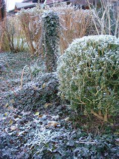 Hermine Paulic: Efeubeet im Winter 15/16